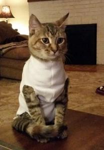 tuna in a shirt